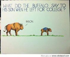 bison joke