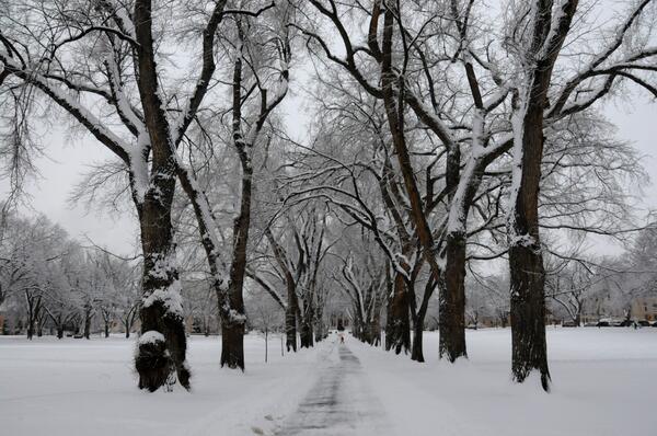 csu oval snow